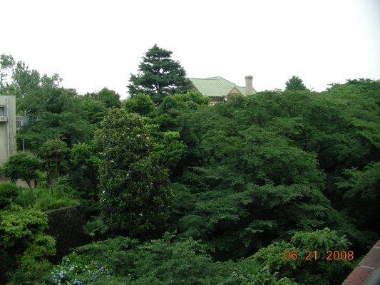 我家隔壁的庭園─2008年6月