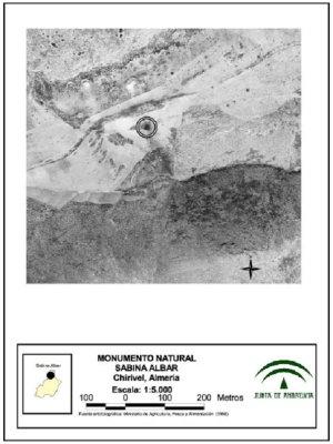 Monumento Natural Sabina Albar mapa