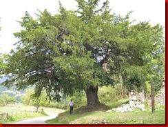 texu-Abamia-romanico